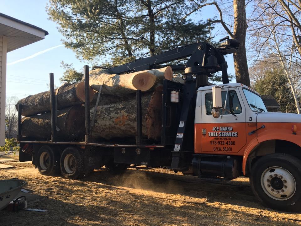 Joe Marra Tree Service Services